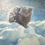 Кот в снегу — фото