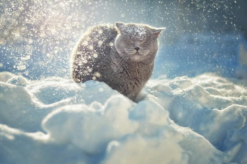 кот фото в снегу