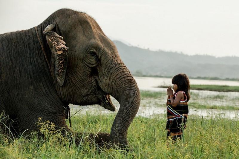 девочка и слон фото
