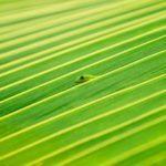 Замаскировавшийся геккон(фото)