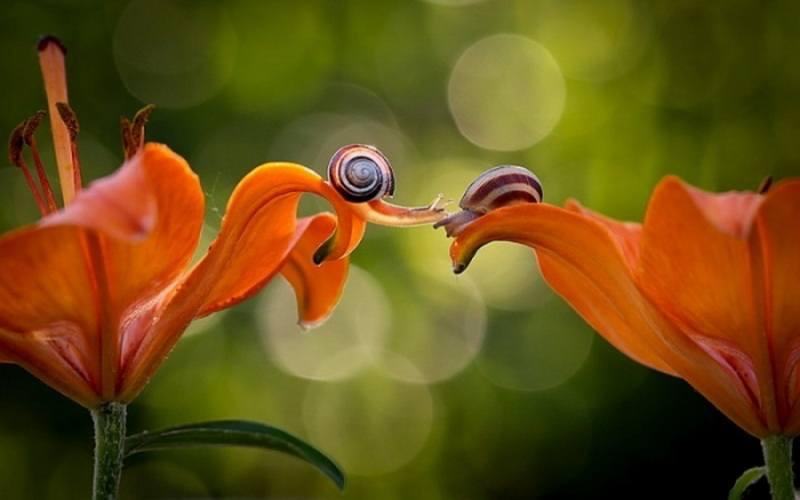 пара улиток на цветках