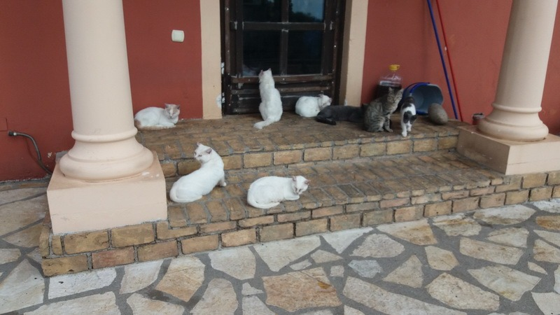 фото -кошачье собрание у ресторана
