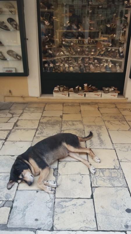фото -собака на улочке в старом городе