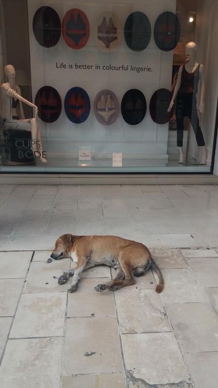 фото собака у магазина в старом городе(Керкира)