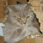 Кот в коробке — фото