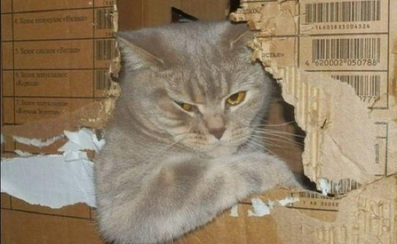 фото кот в коробке