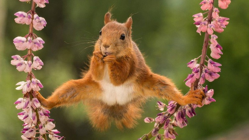 забавное фото белка-гимнастка