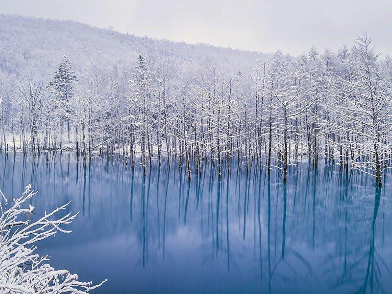 Голубой пруд фото  остров Хоккайдо