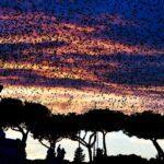 На закате в Риме — фото