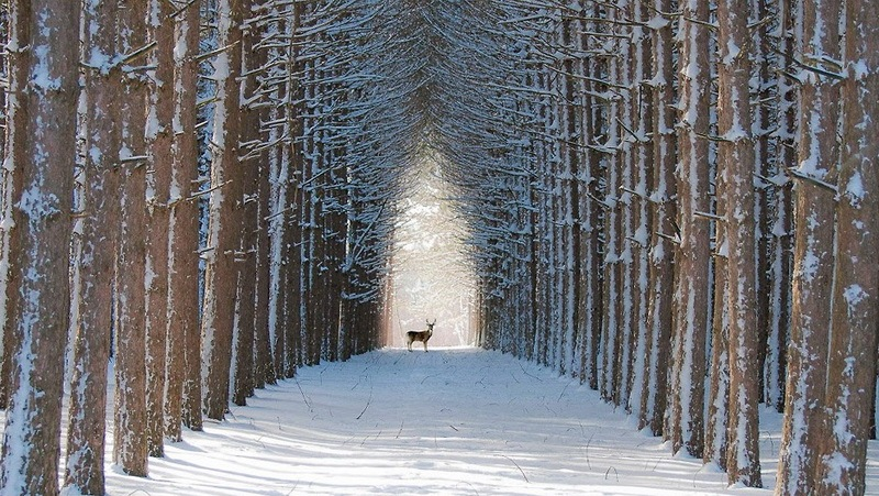 зимняя аллея фото