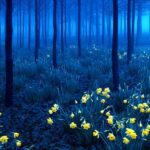 Cиний лес — фото