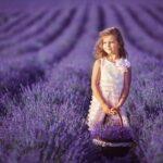 Цветущая лаванда — фото