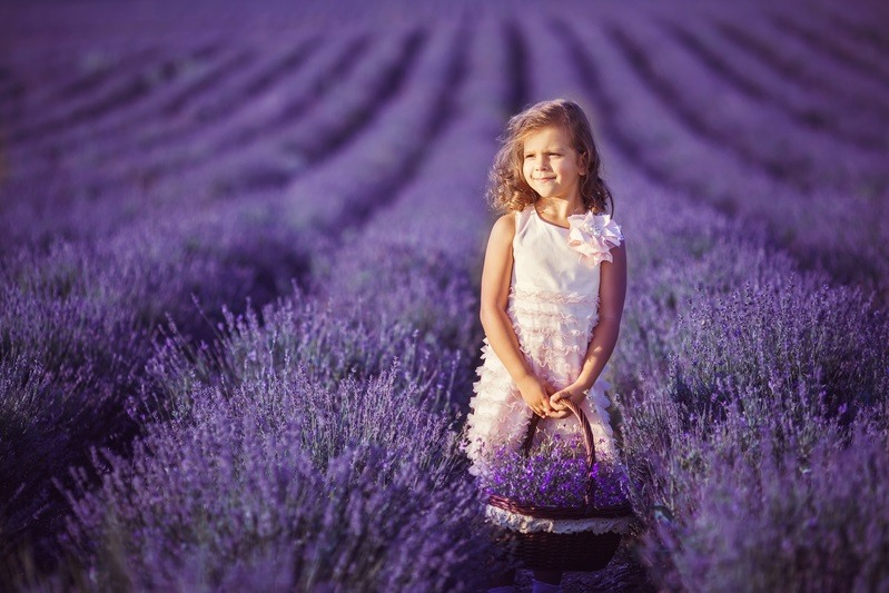 цветущая лаванда-фото