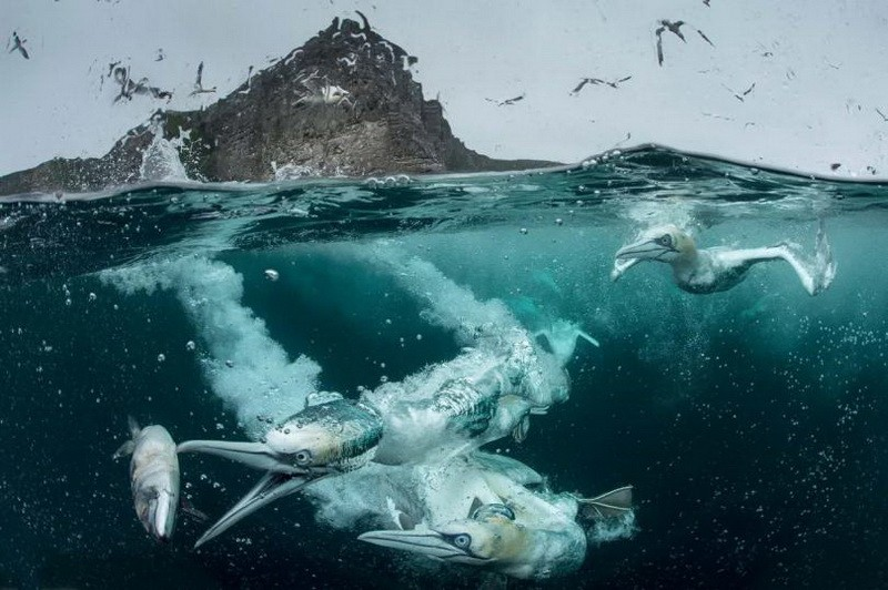 птицы ловят рыбу фото