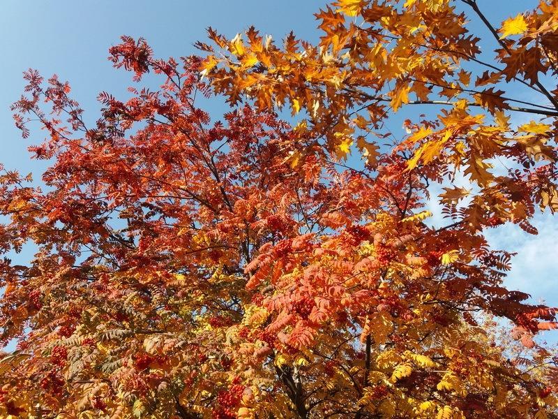 краски октября -фото