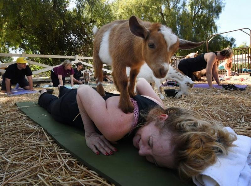 козо-йога фото