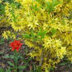 Желтое и красное — фото