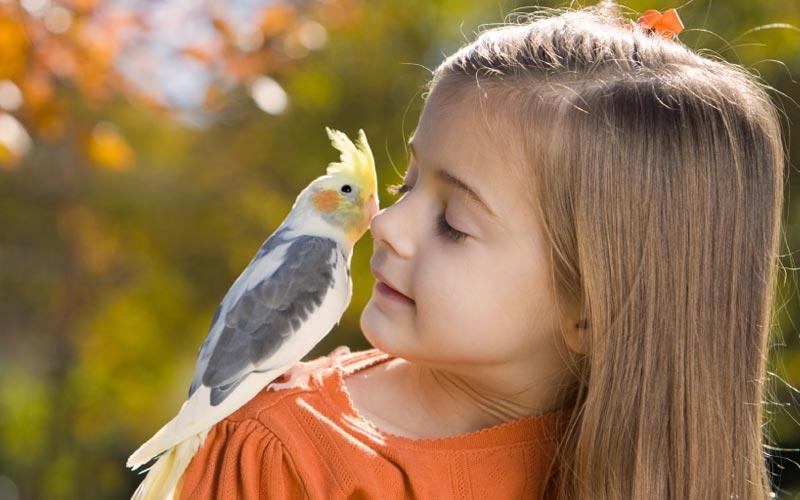 фото девочки с попугаем на плече